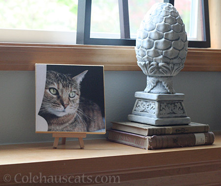 When it's okay to be on the mantle - © Colehauscats.com