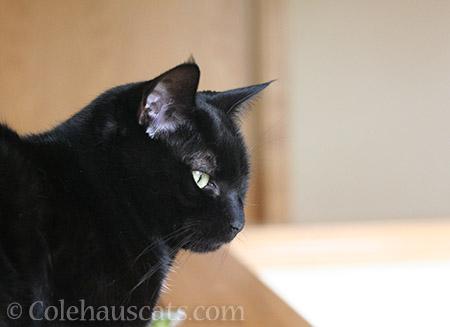Olivia watches - © Colehauscats.com