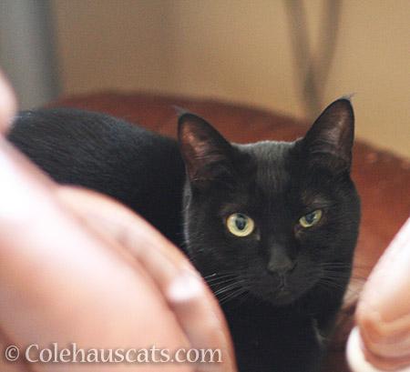 Non-judgmental Olivia judges - © Colehauscats.com