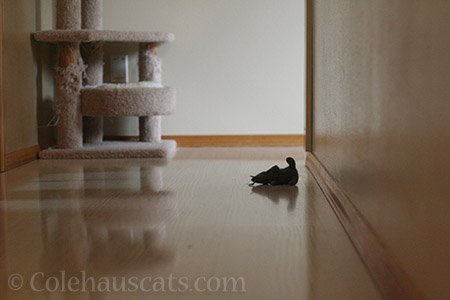 Rat in darkened hall - © Colehauscats.com