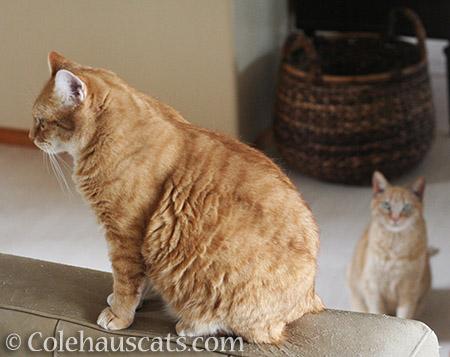 Uh oh - © Colehauscats.com