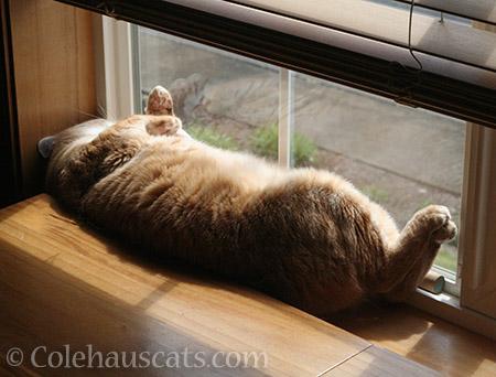 Zuzu's favorite go-to nap spot - © Colehauscats.com