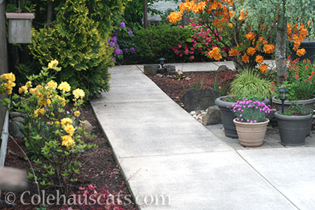 No more dirt covering sidewalks - © Colehauscats.com