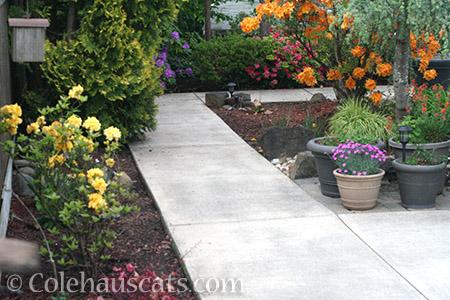 No more dirt covering sidewalks - © Colehauscats.com