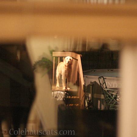 A neighbor's pupper - © Colehauscats.com