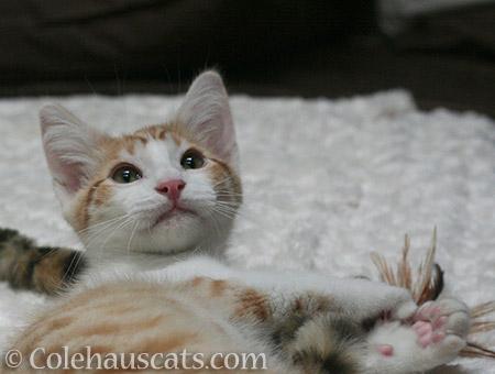 Baby Quint, 2012 - © Colehauscats.com