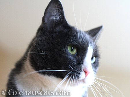 Bright light Tessa - © Colehauscats.com