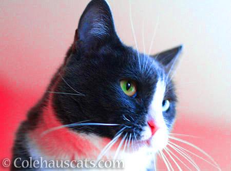 Warm Tessa - © Colehauscats.com