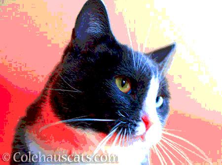 Toasty Tessa - © Colehauscats.com