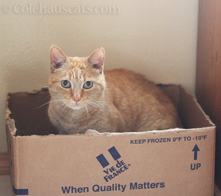 When Quality Matters - © Colehauscats.com