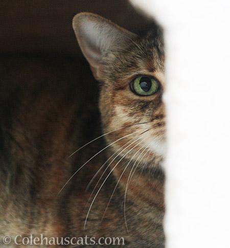Ruby - © Colehauscats.com