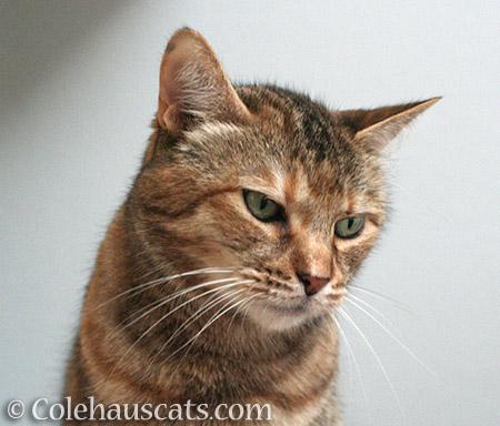 Ruby Grumpie - © Colehauscats.com