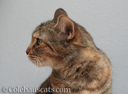 Looking left - © Colehauscats.com