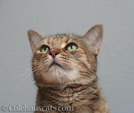 Looking up - © Colehauscats.com