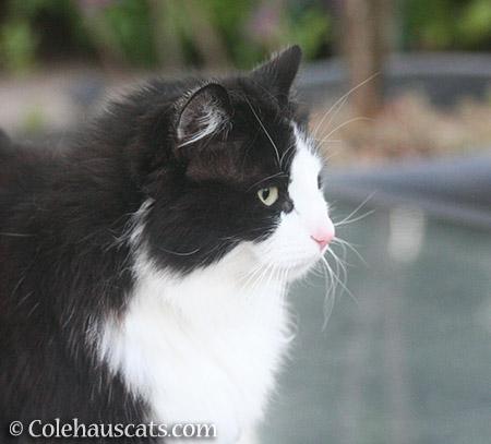 Teese, 2017 - © Colehauscats.com