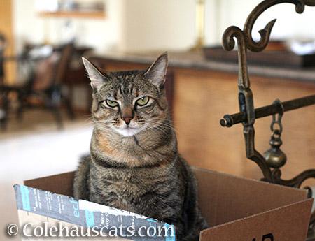 Viola Grumpie - © Colehauscats.com
