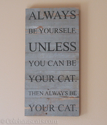 Always be your cat - © Colehauscats.com
