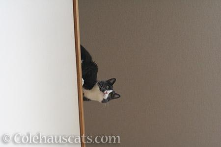 Tessa says Hey - © Colehauscats.com