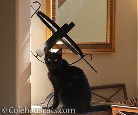 Miss Olivia Sunshine - © Colehauscats.com