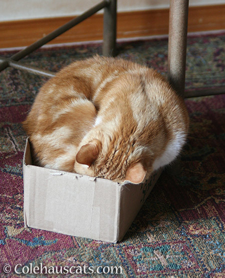 Seth made every box fit - © Colehauscats.com