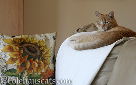 Sunflower and Sunny - © Colehauscats.com