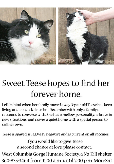 Teese's adoption flyer, September 2017 - © Colehauscats.com