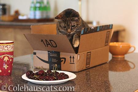 Slowly... slowly... - © Colehauscats.com