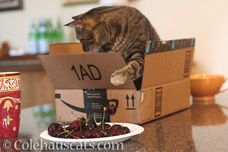 Gotcha! - © Colehauscats.com