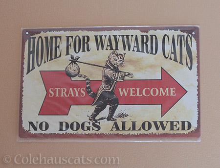 Home for Wayward Cats - © Colehauscats.com