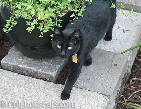 Z comes a-visitin' © Colehauscats.com