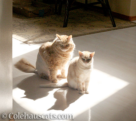 Pia and her BFF Miss Newton - © Colehauscats.com