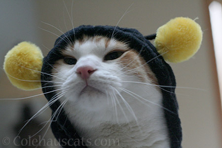 Quint, the Bee - © Colehauscats.com