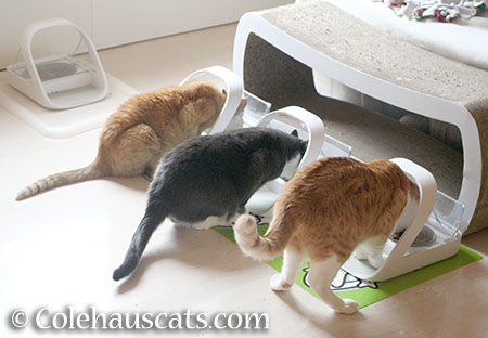 Colehaus Cat dinner x 3 - © Colehauscats.com