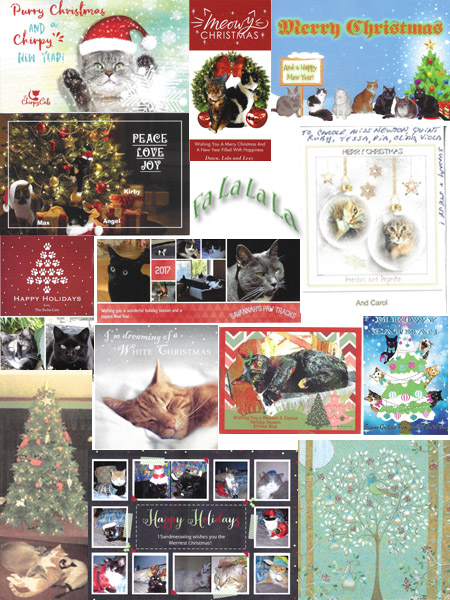 Beautiful Christmas Cards 2017 - © Colehauscats.com