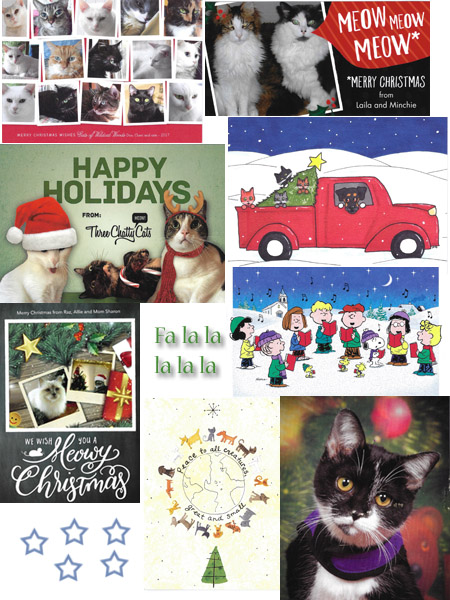 More beautiful Christmas Cards 2017 - © Colehauscats.com