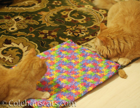 Ginger girls decide blanket rights - © Colehauscats.com