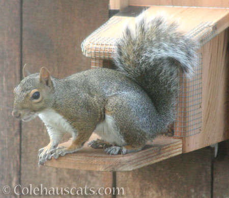 One happy squirrel - © Colehauscats.com
