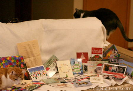 Quint and Tessa and the card haul - © Colehauscats.com