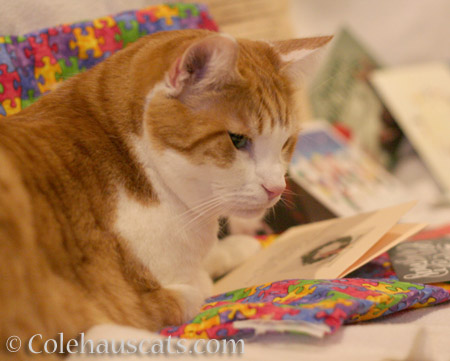 Quint enjoys a beautiful card - © Colehauscats.com