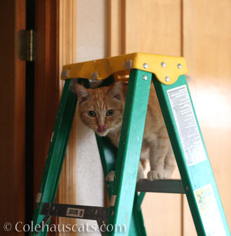 This ladder needs a cat - © Colehauscats.com