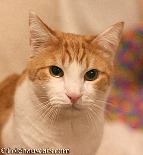 Patient Quint - © Colehauscats.com
