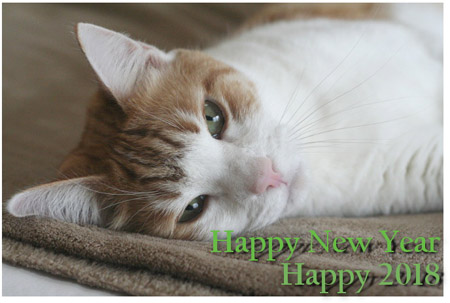 Happy 2018 - © Colehauscats.com