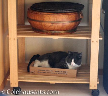 Tessa's spot - © Colehauscats.com