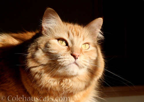 Pia sunshine - © Colehauscats.com