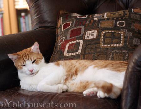 Quint taking it easy - © Colehauscats.com