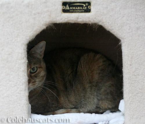 Ruby's warm tower cubbie -  Colehauscats.com