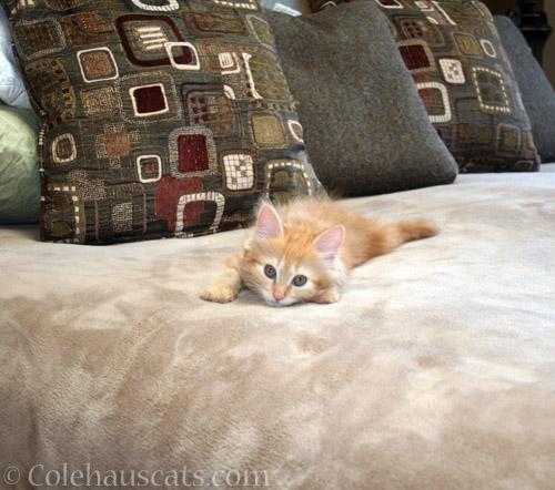 A wee Pia (2012) - © Colehauscats.com