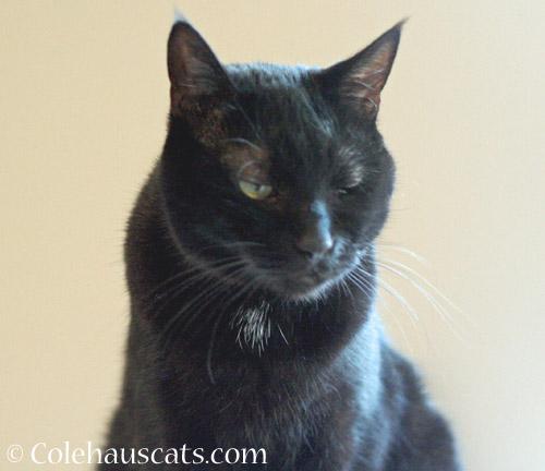 Olivia always watching © Colehauscats.com